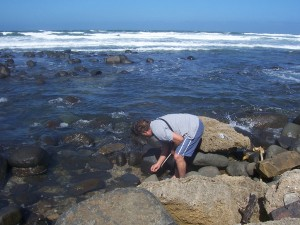 beachcombing at the edge of the ocean