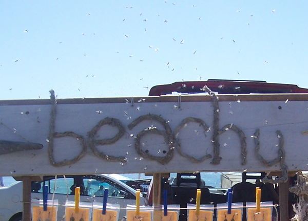 beachy flea market sign and miggies
